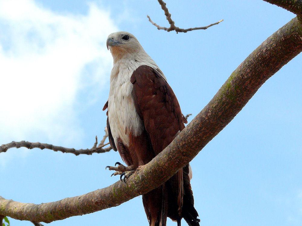 Eagle.334182420