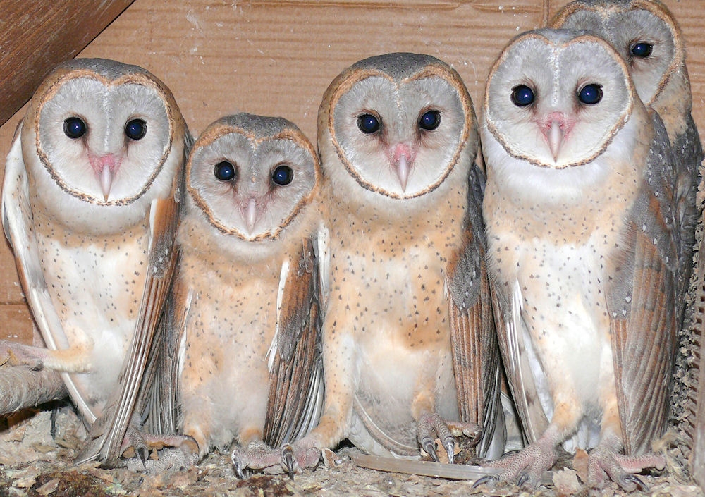 Owls.334175943