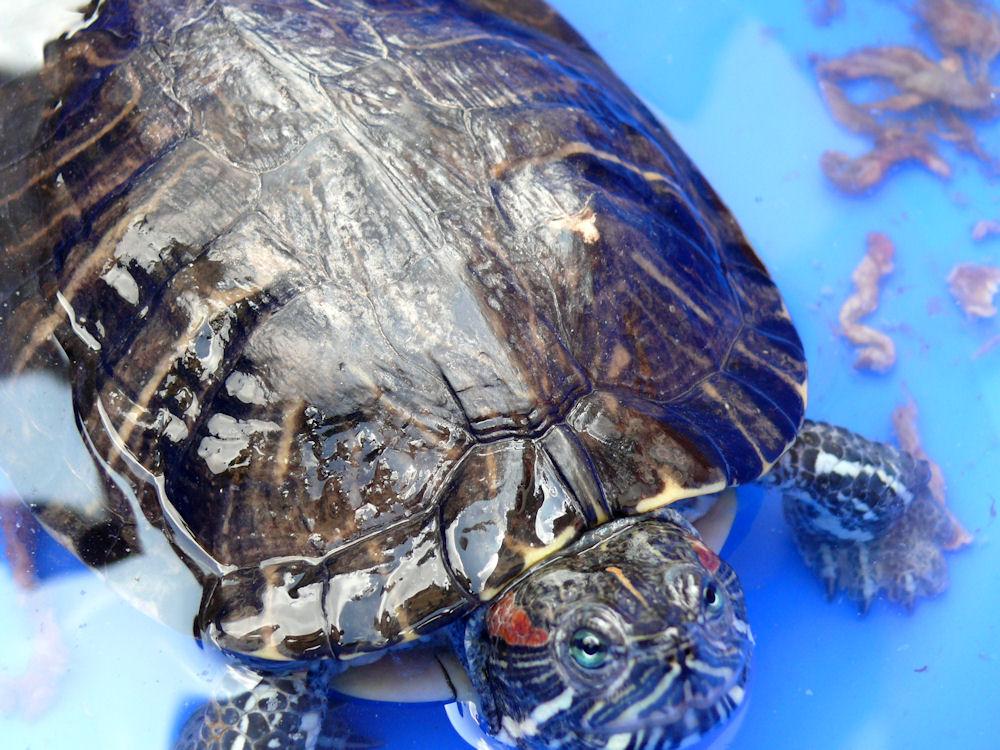 Tortoise.334194425