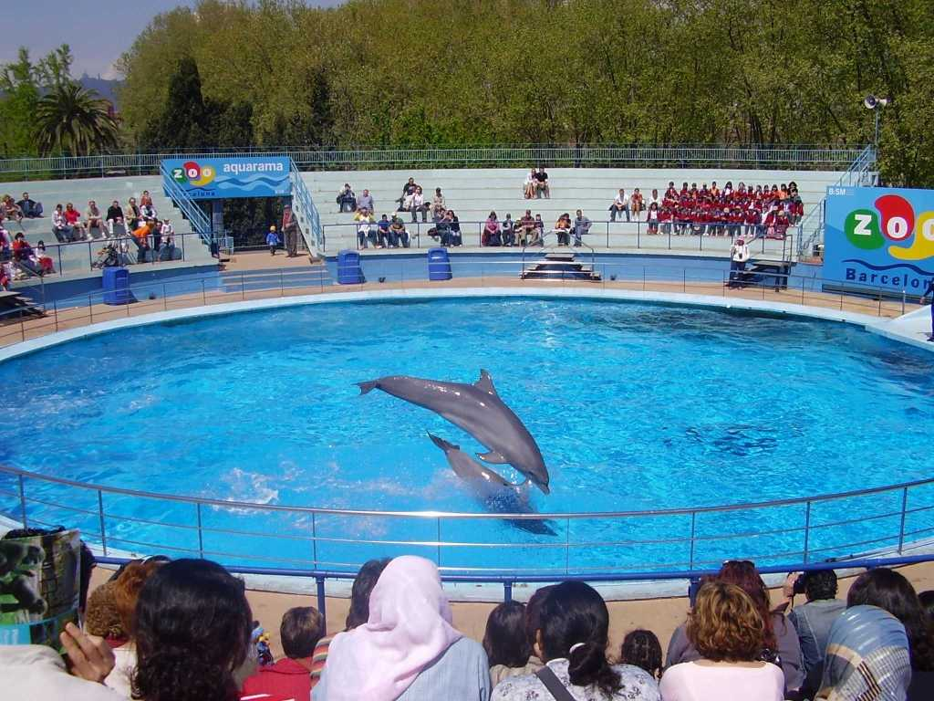 Save Dolphins From Captivity In India Wrrc